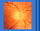 A damaged optic disc